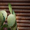 Exterior Materials: Texture Talk