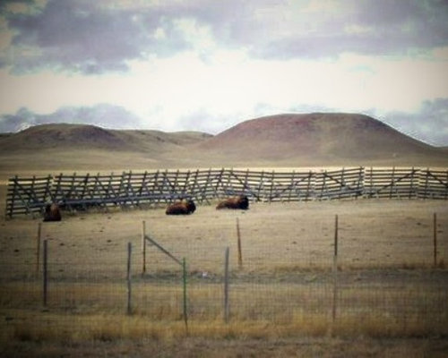 Wyoming snow fence our reclaimed wood source