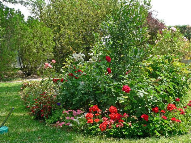 Cuidados y trucos para cuidar el rosal y tener rosas todo for Jardin los rosales