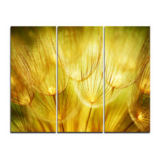 """Soft Yellow Dandelion Flowers"" Photography Wall Art, 3 Panels, 36""x28"""