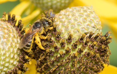 Welcome Sweat Bees to Your Garden Throughout the Growing Season