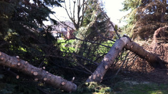 Tree Service Projects
