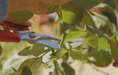 Houzz TV: 5 Tools Every Gardener Should Own