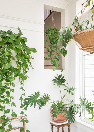 12 Der Schonsten Grossen Zimmerpflanzen Furs Wohnzimmer