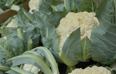 Cool-Season Vegetables: How to Grow Cauliflower
