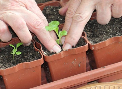 Весна идет: Основные правила выращивания рассады