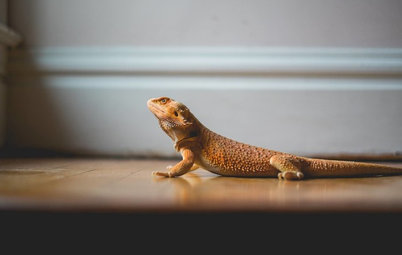 Dragon's Den: Goober the Lizard Conquers the Stairs