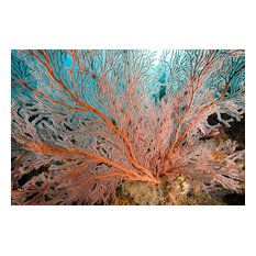 Gorgonia Sea Fan Coral Wallpaper Wall Mural, Self-Adhesive