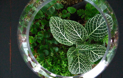 Build Your Own Mini-Ecosystem in a Compact Terrarium
