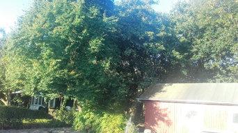 total løsning på træfldning incl flishugning og stubfræsning