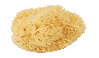 ベリーニ 天然海綿 ハニコムLサイズ(SA16)