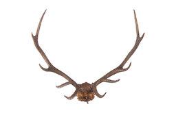 Oak Leaf Antlers Sculpture
