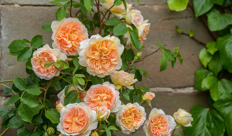 Sneak a Peek at Some of Next Year's Irresistible New Roses
