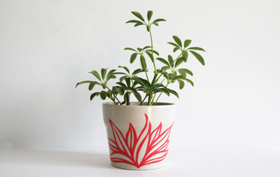 Guest Picks: Playful Planters and Pots