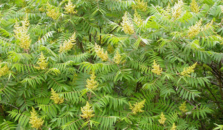 8 Essential Shrubs for Wildlife in the Great Lakes and Midwest