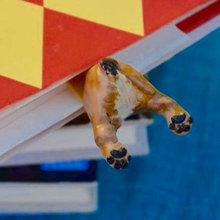 Il Segnalibro più Bello: Quello con il Culetto del tuo Cane