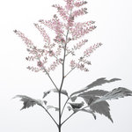 Details by M. - Astilbe Wall Poster, 30x21 cm - Creating a light and airy floral feel in any space, the Astilbe Wall Poster portrays a stem of the pink-ish flower, complete with a few leaves and foliage. Measuring 30 by 21 centimetres, the poster is printed on high-quality matte paper. Details by M. specialises in creating dynamic pieces for the home, creating harmony in each room and ensuring that the details make the difference.