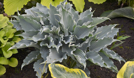 9 New Plants With Spectacular Foliage Color to Try in 2018