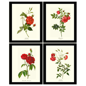 Red Tea Rose Botanical Print Set-4 Framed Antique Vintage Illustrations
