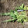 Zen Weeding: The Smart Way to Weed Your Garden