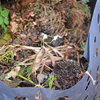 Become the Reigning Champ of Compost