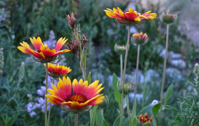 10 Top Flowering Native Plants for Beauty and Wildlife Benefit