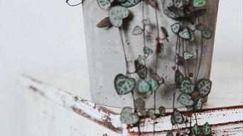 Concrete Pots & Succulents