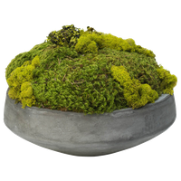 Large Moss In Newport Bowl