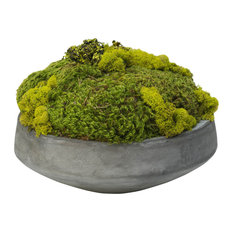 Fosteru0027s Point   Large Moss In Newport Bowl   Artificial Plants And Trees