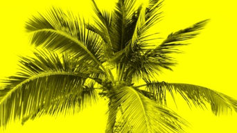 Yellow Palm Tree Art