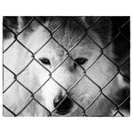 Pi Photography Wall Art and Fine Art - Dreams of Freedom Black & White Wildlife Photo (Wolf) Unframed Wall Art Print, 2 - Dreams of Freedom (Wolf) Wildlife Photography - Luster Photo Paper Unframed Wall Art Print