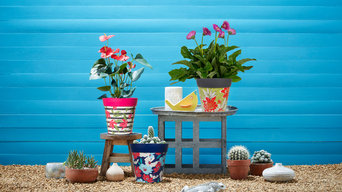Colourful plant pots for outdoors or indoors