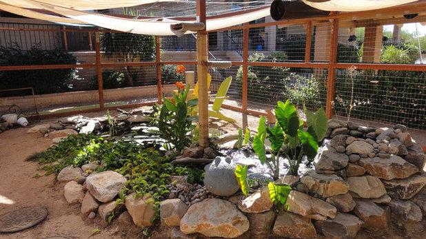 Eclectic Landscape Kitty Enclosure