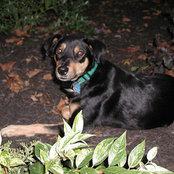 cerberusdog's photo