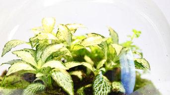 Petit terrarium tropical