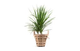 Strap Planter, Medium