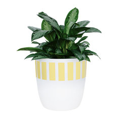 Plumb Cylinder Planter, Yellow, 10.5""
