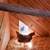 Hens Nest in Style in a Modern Nevada Coop