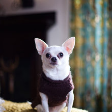 Houzz Call: Send in the Dogs