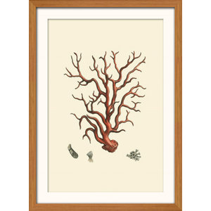 """""""Red Coral"""" Framed Print, 41x56 cm, """"Red Branching Coral"""""""