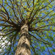 Foto de Lucas Tree And Landscaping LLC