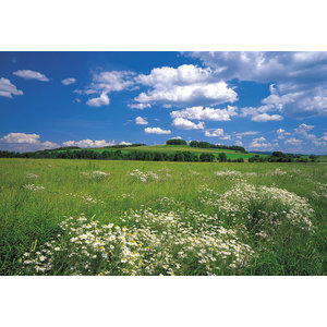 Meadow Wild Flowers Photo Wall Mural, 368x254 cm