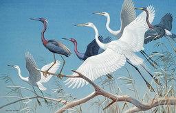 Herons and Egrets Wallpaper Wall Mural, Self-Adhesive