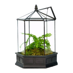 Six Sided Glass Terrarium, Wardian Case Plant Container