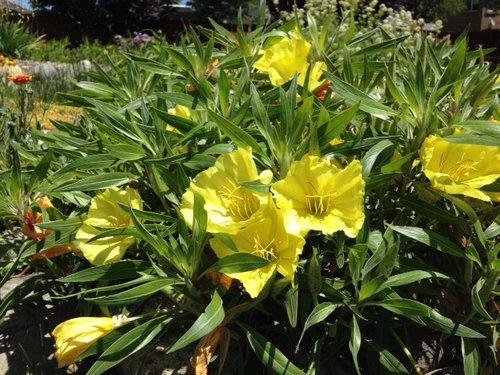 Identify yellow flowers mightylinksfo