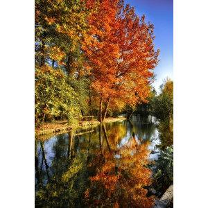 """Colours of Autumn"" Photo Print, Art Poster, 40x30 cm"