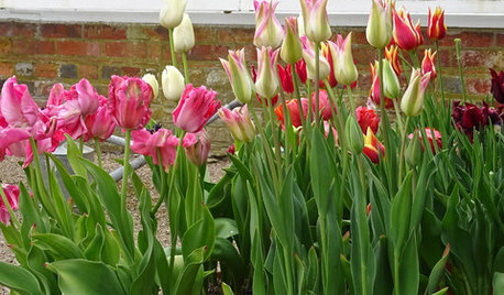 It's Bulb-planting Season! 10 Tips for Getting it Right