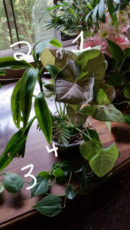 Help identifying houseplants I inherited on