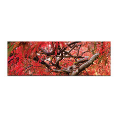 Japanese Maple, Canvas Print
