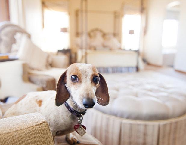 Reader Pet Photos